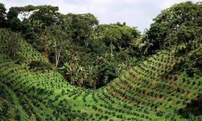 Coffee Tradition Of Santiago De Cuba To Be Used By Authorities To Gain Profits