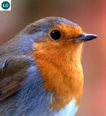 "Banned By Facebook Bans Christmas Cards Of A Redbreast For Being ""Sexual"""