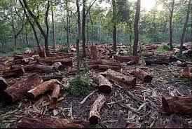 McDonald's And Other Food Firms Urge UK Govt For Tougher Rules On Deforestation