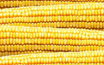 New Threat to Battered Global Market Posed as China Set to Export Corn: Reuters